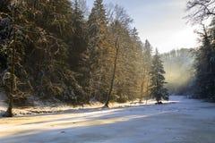 Paisaje del bosque en invierno Foto de archivo