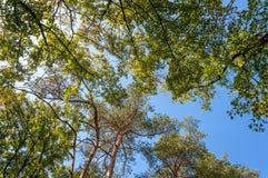 Paisaje del bosque en un día soleado del otoño Foto de archivo libre de regalías