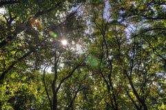 Paisaje del bosque en un día soleado del otoño Foto de archivo