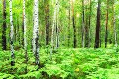 Paisaje del bosque, filtro suave Imagenes de archivo