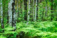 Paisaje del bosque, filtro suave Imágenes de archivo libres de regalías