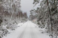 Paisaje del bosque del invierno Una trayectoria en el bosque en un traje del invierno Imágenes de archivo libres de regalías