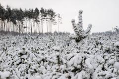 Paisaje del bosque del invierno Una trayectoria en el bosque en un traje del invierno Fotos de archivo