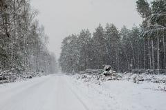 Paisaje del bosque del invierno Una trayectoria en el bosque en un traje del invierno Foto de archivo libre de regalías