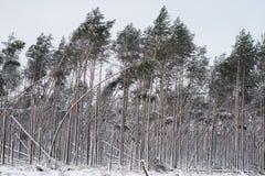 Paisaje del bosque del invierno Una trayectoria en el bosque en un traje del invierno Imagen de archivo