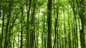 Paisaje del bosque, naturaleza polaca Foto de archivo