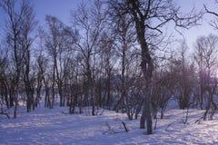 Paisaje del bosque Nevado en Laponia fotografía de archivo