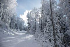 Paisaje del bosque nevoso en día soleado fotos de archivo libres de regalías
