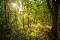 Paisaje del bosque por la tarde Imágenes de archivo libres de regalías