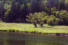 Paisaje del bosque, valle verde con dos árboles en el centro a Foto de archivo libre de regalías