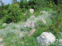 Paisaje del bosque del verano con un prado de la flor fotos de archivo libres de regalías