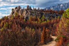 Paisaje del bosque y de la montaña de Croacia fotos de archivo