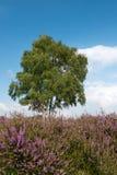 Paisaje del brezo Fotos de archivo libres de regalías