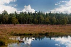 Paisaje del brezo Imagen de archivo libre de regalías