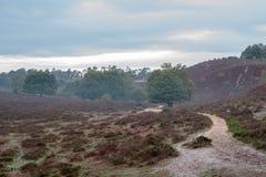 Paisaje del brezo con árboles y un pequeño camino de la arena foto de archivo libre de regalías