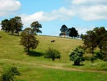 Paisaje del caballo y de la montaña foto de archivo libre de regalías
