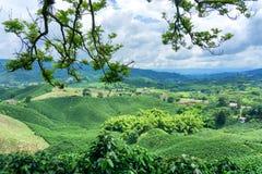 Paisaje del café en Colombia fotos de archivo