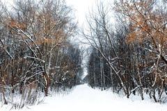 Paisaje del callejón del invierno Fotos de archivo libres de regalías