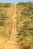 Paisaje del camino de tierra del valle de la jirafa Fotografía de archivo libre de regalías