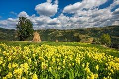 Paisaje del campo con las flores y el pajar Imagen de archivo