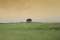 Paisaje del campo con un árbol Fotografía de archivo