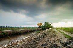 Paisaje del campo de arroz durante la estación de la monzón Cielo nublado y tiempo de sunlight foto de archivo libre de regalías