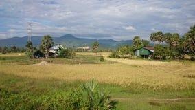 Paisaje del campo de arroz en Kampot Camboya 3 Imagen de archivo libre de regalías