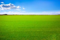 Paisaje del campo de hierba Imágenes de archivo libres de regalías