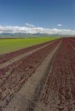 Paisaje del campo de la lechuga: Vertical roja Fotos de archivo