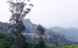 Paisaje del campo de la plantación de té Fotografía de archivo libre de regalías