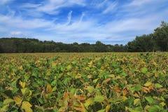 Paisaje del campo de la soja Imagenes de archivo