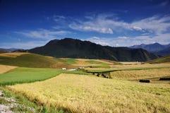 Paisaje del campo de maíz y de la montaña Fotos de archivo libres de regalías