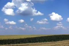 Paisaje del campo de trigo Fotografía de archivo