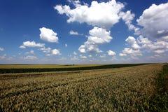 Paisaje del campo de trigo Imagenes de archivo