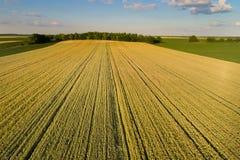 Paisaje del campo de trigo en llanos Imagen de archivo