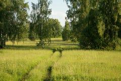 Paisaje del campo del verano Foto de archivo
