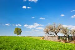 Paisaje del campo durante la primavera con los árboles y la cerca solitarios Fotos de archivo libres de regalías