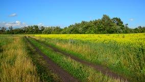 Paisaje del campo en tiempo ventoso en verano metrajes