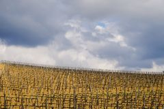 Paisaje del campo en Toscana, Italia imagen de archivo libre de regalías