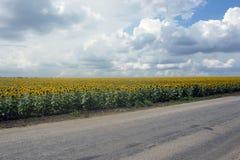 Paisaje del campo del girasol en la época del día de verano para el fondo Fotografía de archivo libre de regalías