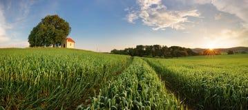 Paisaje del campo del panorama de la primavera con el campo de trigo Fotos de archivo libres de regalías