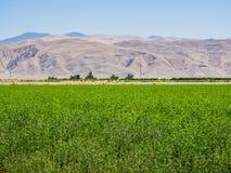 Paisaje del campo verde en California Fotos de archivo