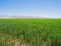 Paisaje del campo verde en California, los E.E.U.U. Foto de archivo libre de regalías