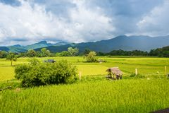 Paisaje del campo y de la montaña de arroz debajo del cielo azul en día de la sol Foto de archivo