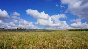 Paisaje del cielo de la hierba del campo almacen de metraje de vídeo