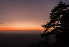 Paisaje del cielo de la puesta del sol con la silueta de los árboles de pino fotos de archivo libres de regalías