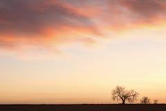 Paisaje del cielo de la salida del sol de tres árboles Foto de archivo