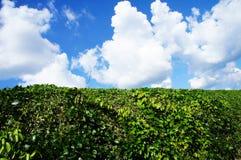 Paisaje del cielo y de la planta Foto de archivo