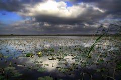 Paisaje del delta de Danubio Imagen de archivo