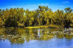 Paisaje del delta de Danubio Fotografía de archivo libre de regalías